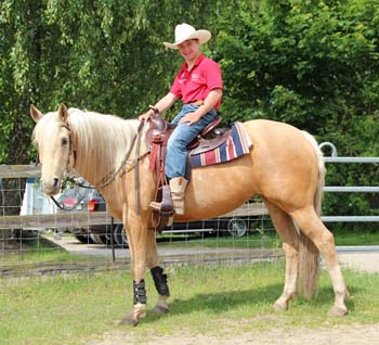 http://western-journal.de/wp-content/uploads/2014/06/Pferd.jpg