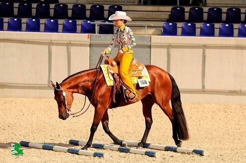 Hotroddin Invitations Tochter Gentle Invitation ist mit ihren AQHA points das derzeit erfolgreichste American Quarter Horse Europas